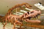 paleontologicheskiy_muzey_0.jpg